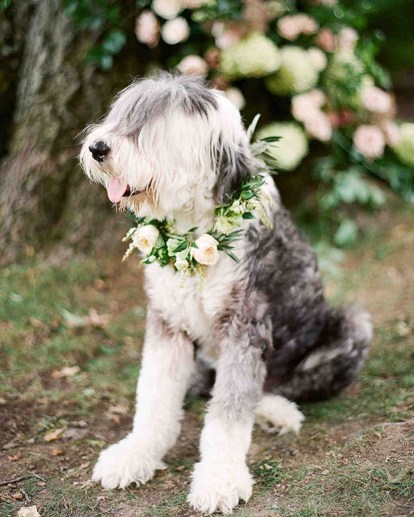 Involving your endearing cherished pet at your wedding is turning out to be increasingly fashionable.