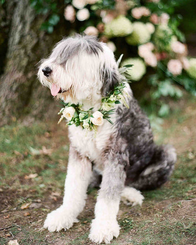 Dog in wedding wearing bridalbouquets.com silk rented wedding flowers