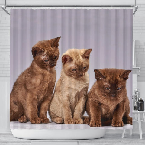 Three Burmese Cat Print Shower Curtain-Free Shipping