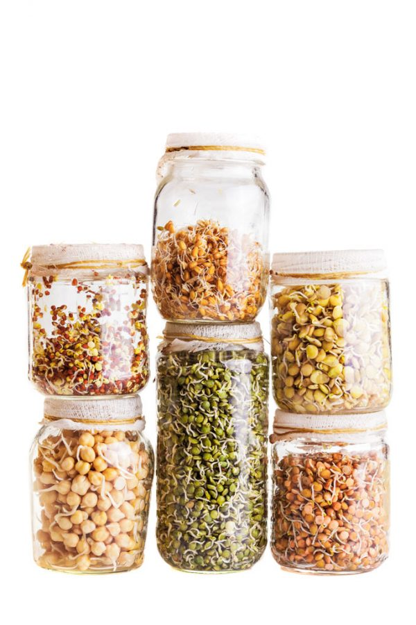 SPROUTED PULSES AND GRAINS