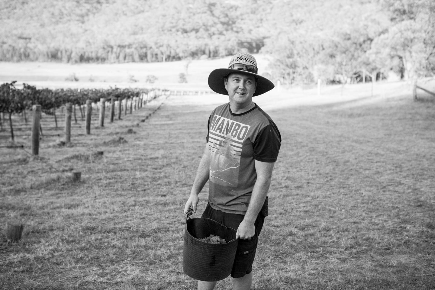 Ash in the family Vineyard - Upper Hunter Valley