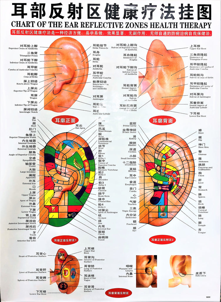 Chart of the Ear Reflective Zones Health Therapy 耳部反射区健康疗法挂图