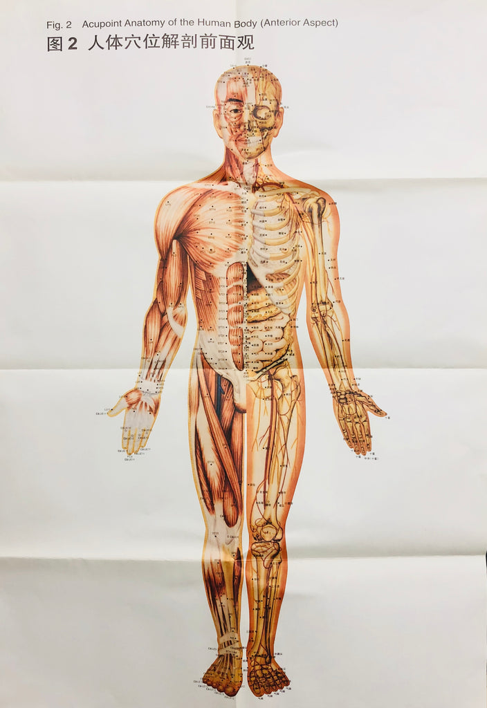 Instructions of Anatomical Charts of Internationally Standardized Acupoints 国际标准腧穴解剖挂图
