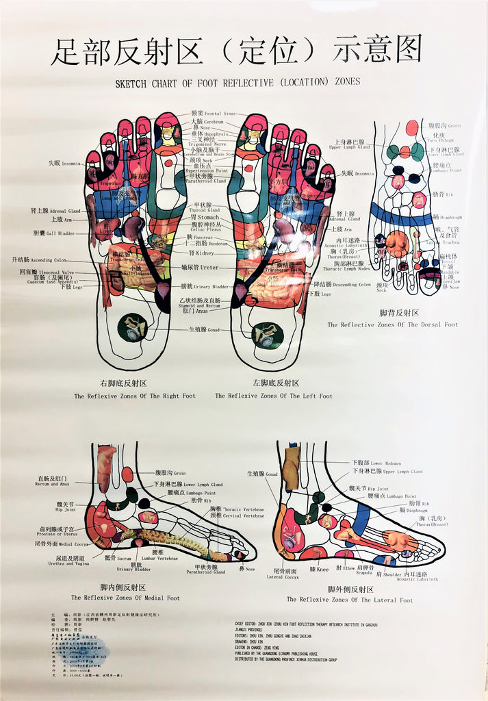 Sketch Chart of Foot Reflective (Location) Zones  足部反射区(定位)示意图