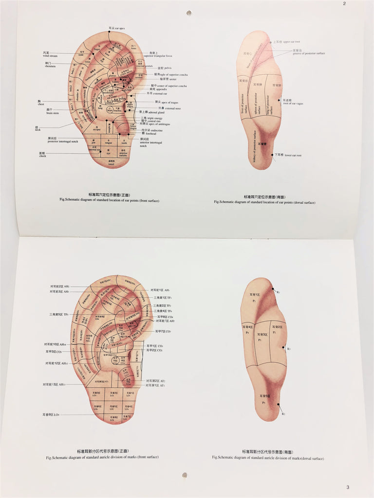 The Practical Chart of Ear Acupuncture Points 实用耳针穴位挂图