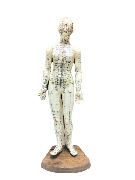 Body Model Acupuncture and Meridian Points (Female)