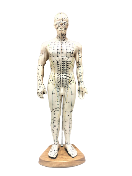 Body Model Acupuncture and Meridian Points (Male)