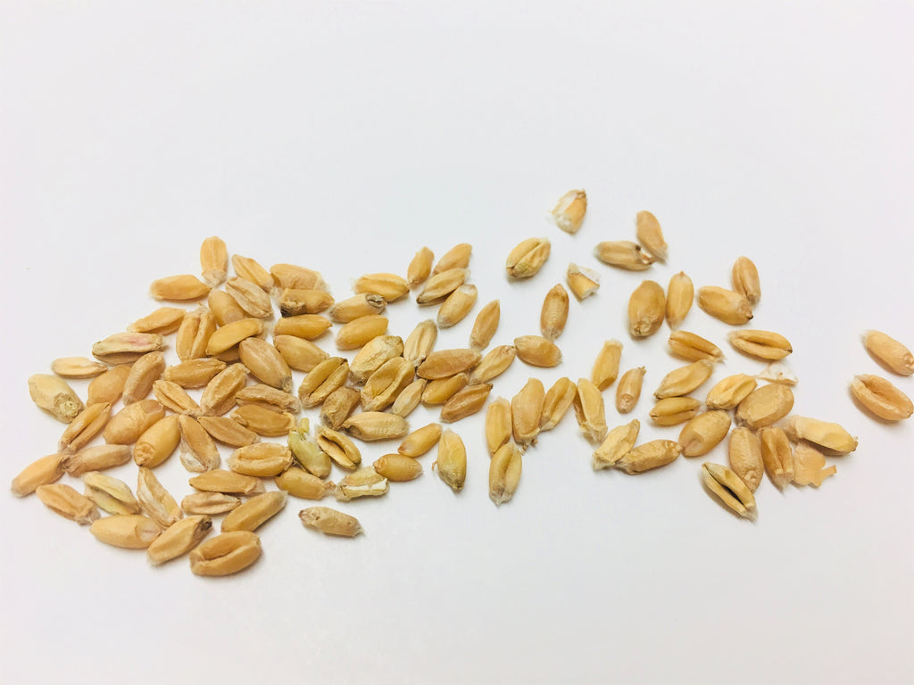 Fu Xiao Mai (Blighted Wheat, Fructus Tritici Levis, 浮小麦)