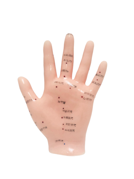 Hand Acupuncture Point Model
