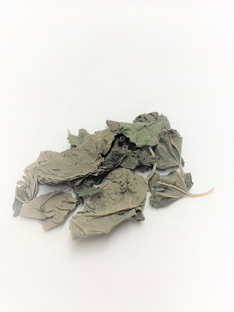 Dong Sang Ye (Winter Mulberry Leaf, Folium Mori, 冬桑叶)