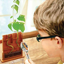 Grow-A-Maze Green Science Kit