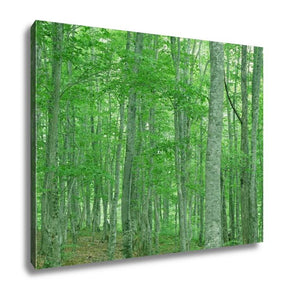 Gallery Wrapped Canvas, Green Forest Nature Landscape