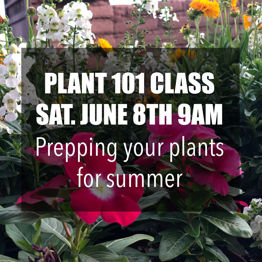 FREE Plant 101 Class: Prepping your plants for summer