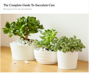 We teamed up with The Backyard Gnome in the awesome article about Succulent Care!