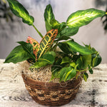 House Plant Gift Basket
