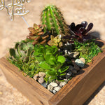 Succulent Arrangement: The Mother
