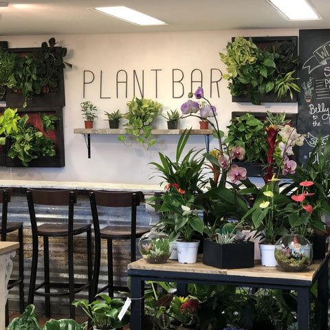 Saturday March 14th Plant Workshop (Multiple Times)