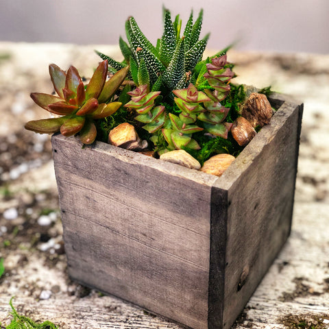 Succulent Arrangement: The Mommy