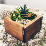 Succulent Arrangement: The Mom