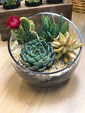 Bowl filled with Succulents & Rock Gift