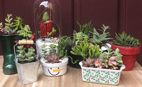 Holiday Planter Class