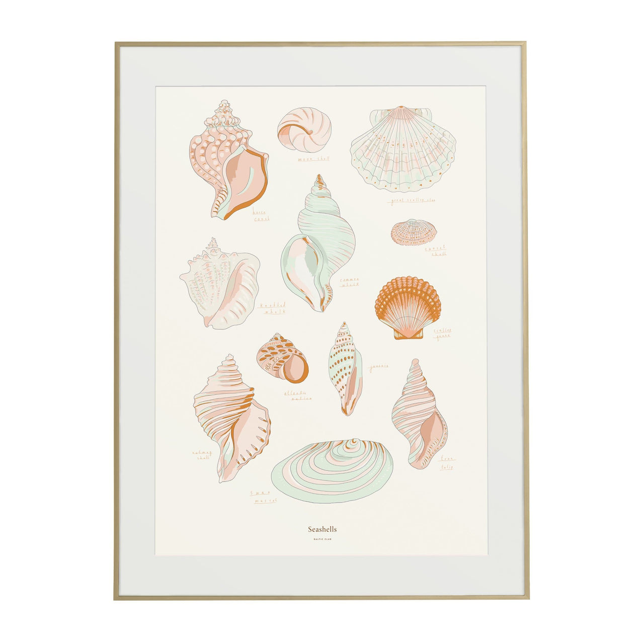 Baltic Club Photography & Prints Seashells Art Print