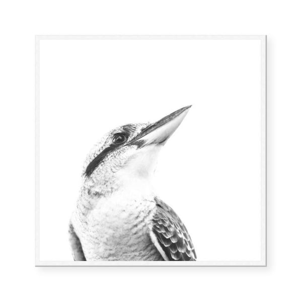 Australiana | The Kookaburra