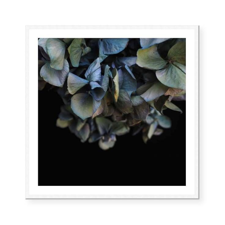Blue Hydrangea | Open Edition Art Print | Katie Clulow