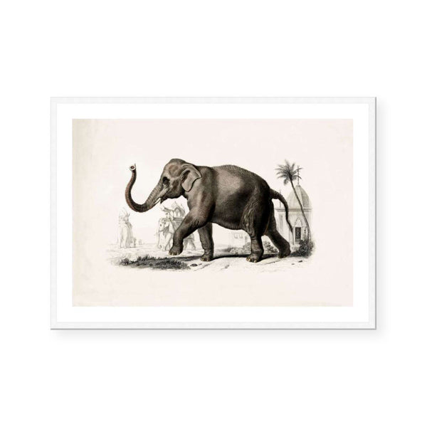 Botanic Antique | Elephant