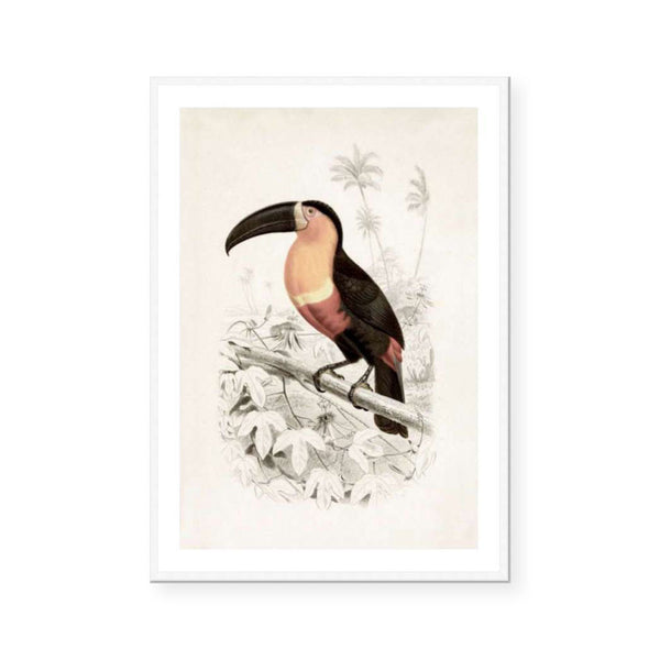 Botanic Antique | Toucan
