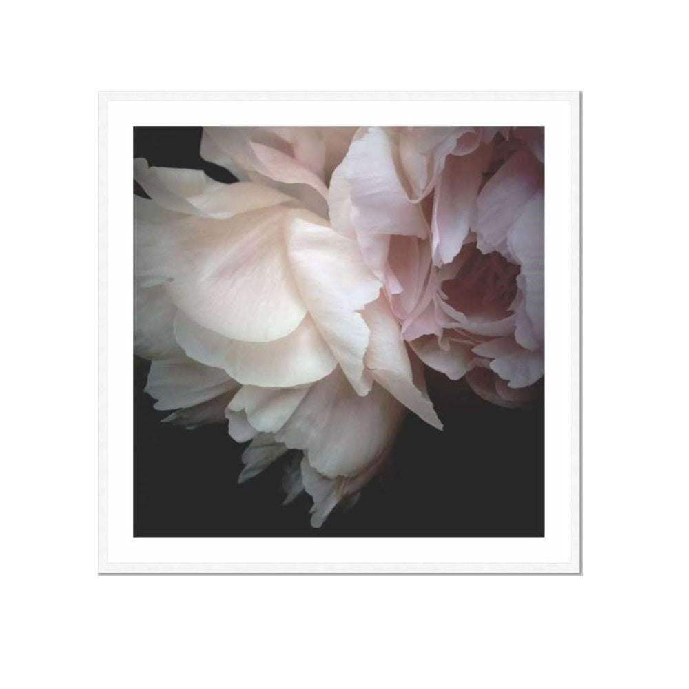 Peony | Open Edition Art Print | Katie Clulow