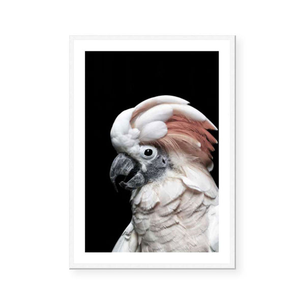Pink Cockatoo | With Border