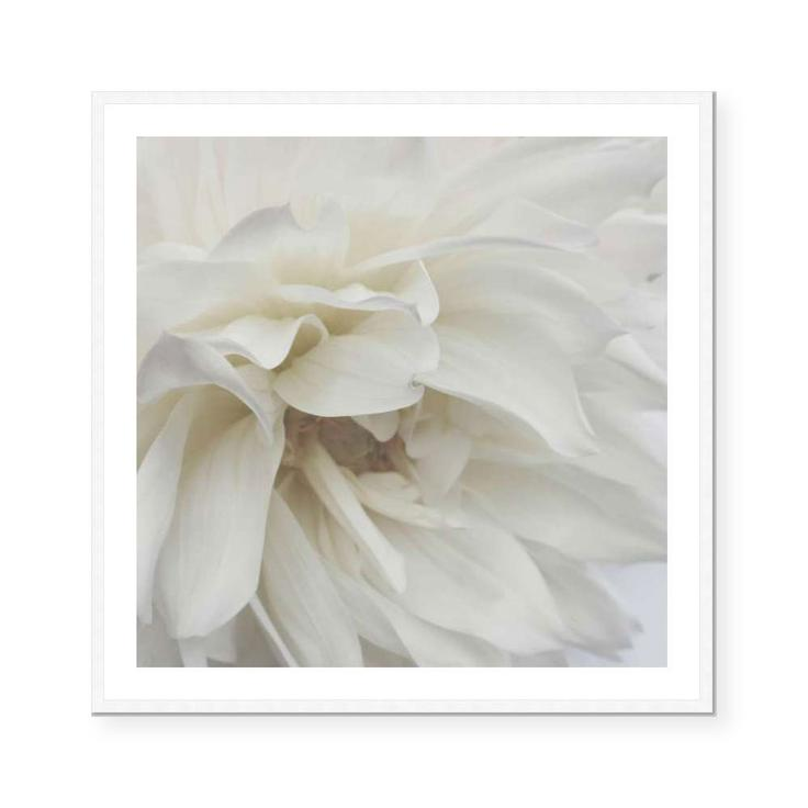 Soft Dahlia | Open Edition Art Print | Katie Clulow
