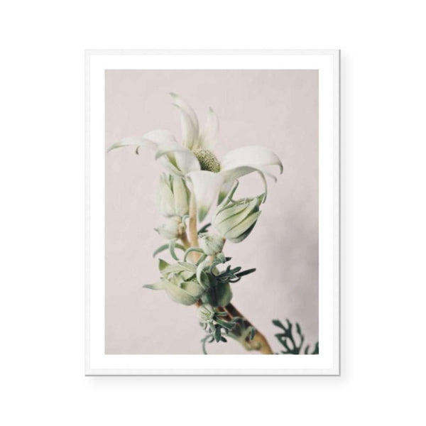 Valerie | Open Edition Art Print | Katie Clulow