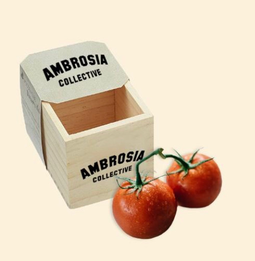 Ambrosia Planter Box with Tomato Seeds <br> $20