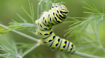 5 Easy, Natural Ways to Deal With Summer Plant Pests
