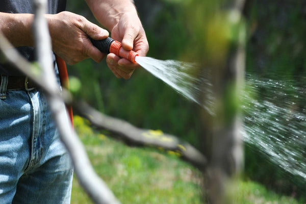 How to Naturally Avoid Drought Stress in Your Garden