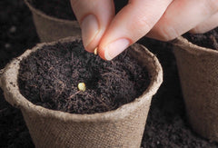 How To Start Seeds For Your Garden