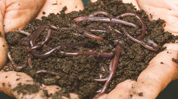 How to Compost With Worms - Vermicomposting Basics