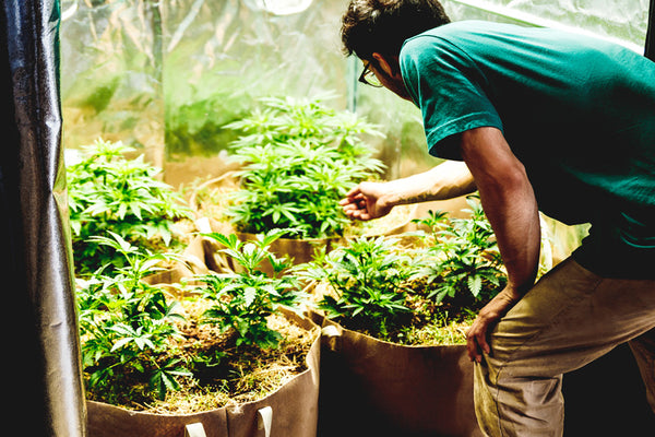 The Beginners Guide To Growing In Living Soil