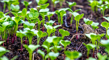 The Benefits of Using Cover Crops In Your Garden