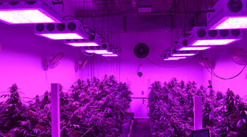 Top 5 Best LED Grow Lights For Home & Commercial Growers