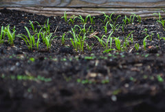 What Are Soil Amendments and How Should You Use Them in Your Garden?