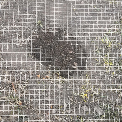 after a vole tried to get through the wire mesh