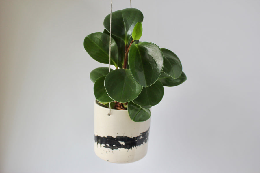 Hanging Planter - 4 inch