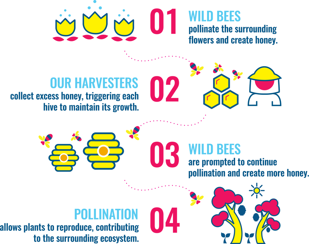 Wild Bees pollinate the surrounding flowers and create honey. Our harvesters collect excess honey, triggering each hive to maintain its growth. Wild bees are prompted to continue pollination and create more honey. Pollination allows plants to reproduce, contributing to the surrounding ecosystem!