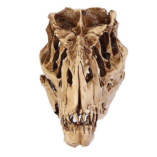 Resin Dinosaur Tooth Skull Fossil Skeleton