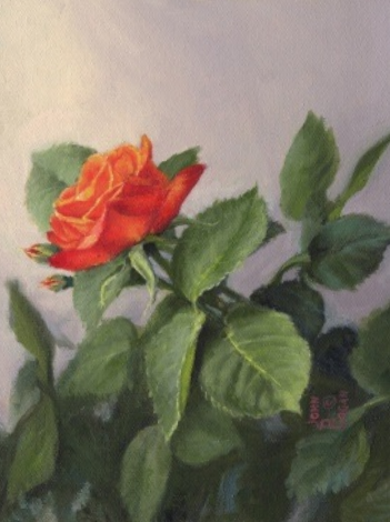 Garden Rose by John Cogan