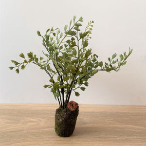 Faux Maidenhair