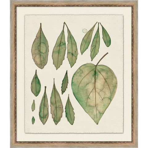 Foliage 1 - Pacific Design Co.